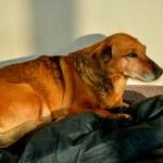 【シベリアのハチ公】主人が亡くなってからも毎朝会いに来る犬「マーシャ」
