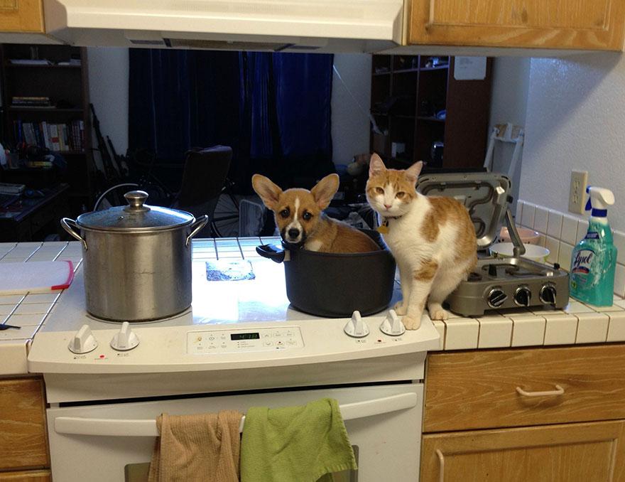 corgi-cat-friends-animal-friendship-love-2
