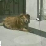 グーグルマップがきっかけである犬が救われた話