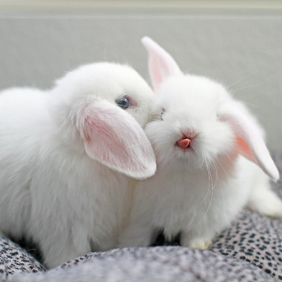 l-I-never-realized-how-cute-baby-bunny-tongues-are1