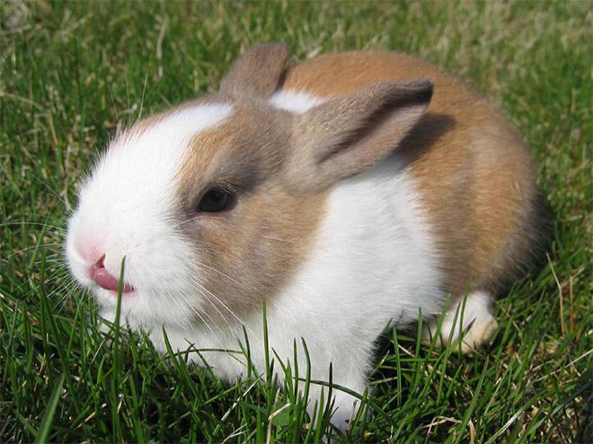 silly-bunny6