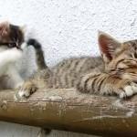 眠りたいネコvs遊びたいネコ!壮絶なバトルに癒されまくり(0:57)