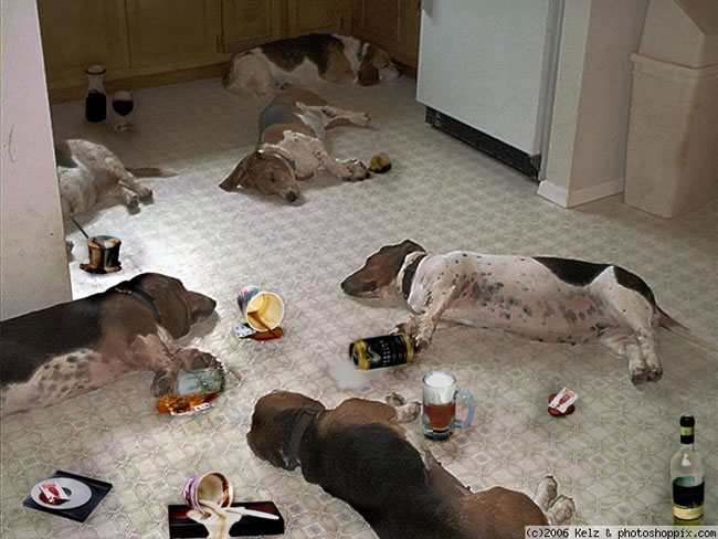 20-Hungover-Animals-Suffering-The-Morning-After-3
