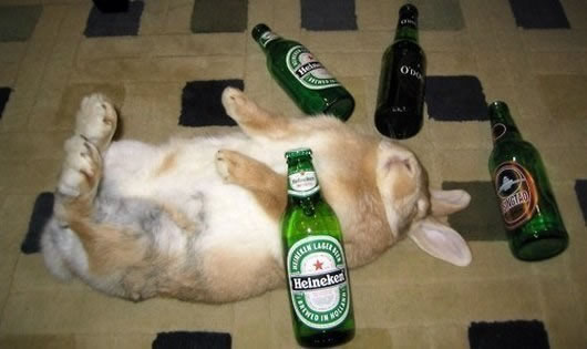Drunk-Animals-Suffering-The-Morning-After-4
