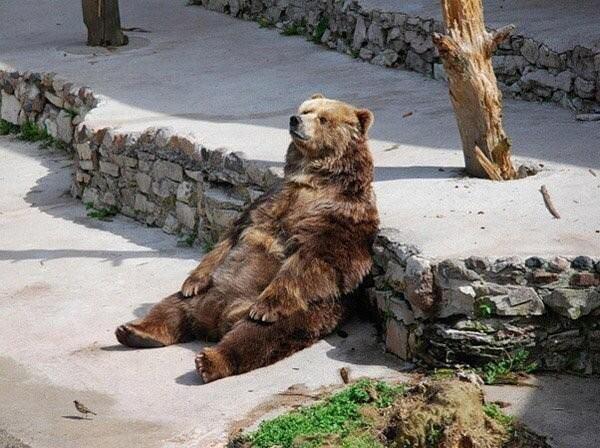 bear-dufnering