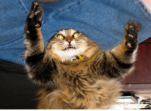 funny-crazy-looking-cat-picture