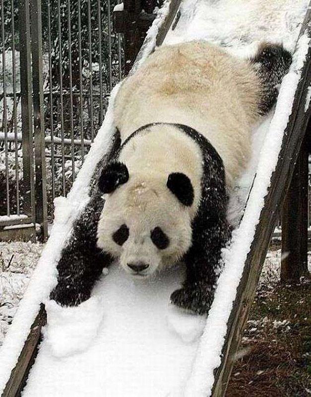 pandas02