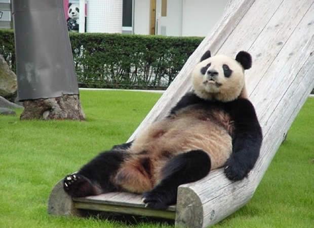 oso-panda-durmiendo