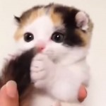 何度も見てしまう…自分のシッポに夢中になる子猫がたまらにゃい(0:15)