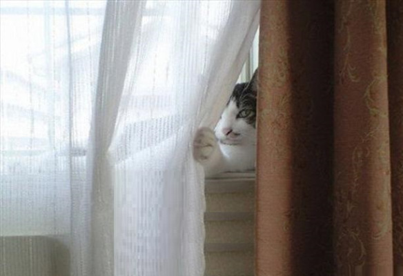 the-world_s-top-10-best-images-of-cats-hiding-2