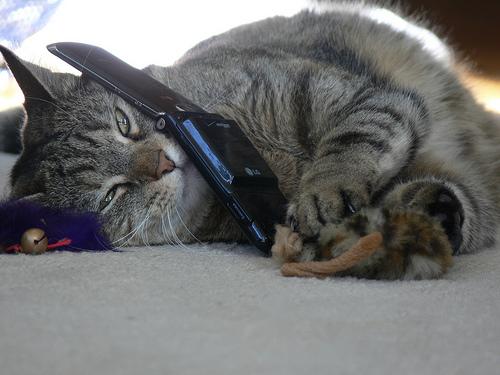 catphone