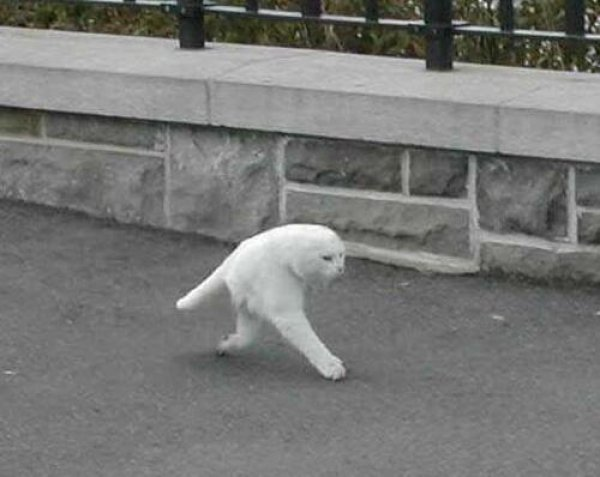 google-street-view-4-cat