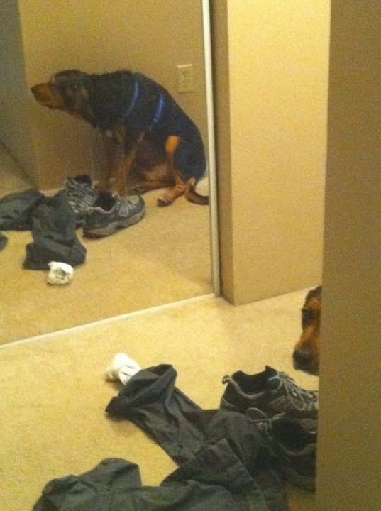 funny-dogs-playing-hide-and-seek-16