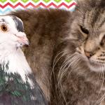 これは迷惑(笑)眠りたいネコの耳元でクルックーーー♪♪♪と挑発するハトさん(1:25)