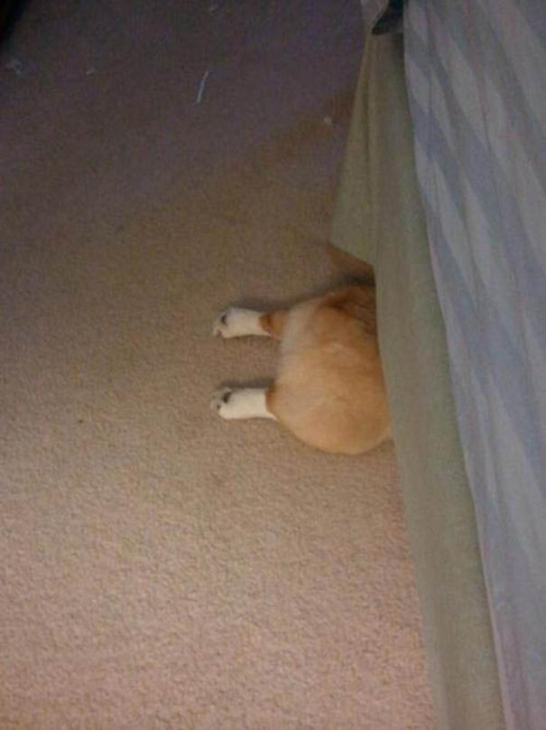 hiding-ninja-funny-dogs-141__605