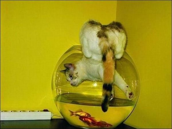 fishcat
