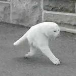 二足歩行のニャンコを発見!撮影ミスが生んだキモかわいい生き物たち10選