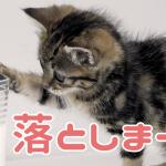 猫「コップ割るよ?」→飼い主「待って!!」→猫「お断りします!!!」(0:35)