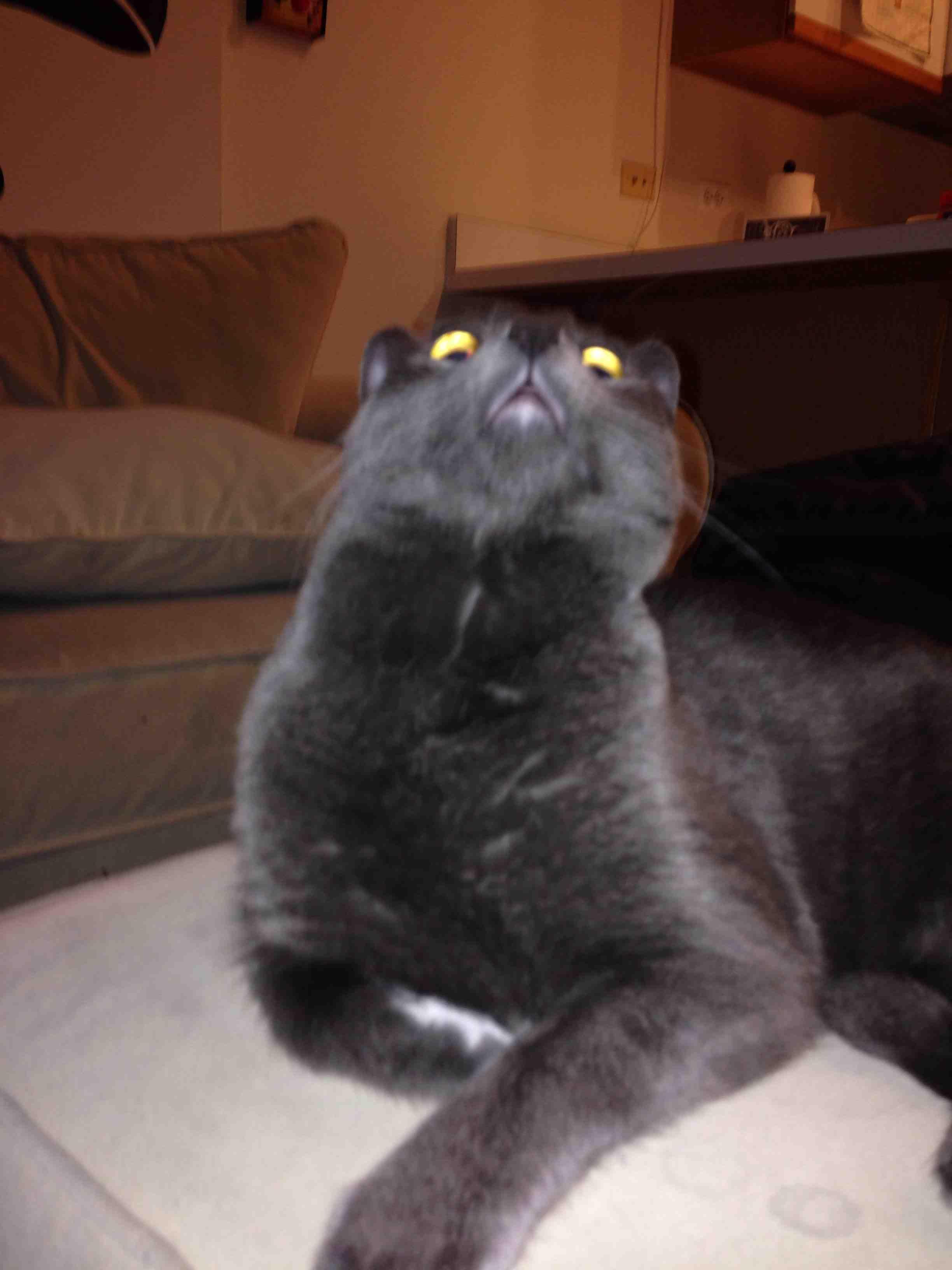 0972606_Surprised-Cat