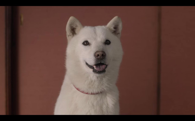 ソフトバンクのお父さんが「犬になった理由」がついに判明!