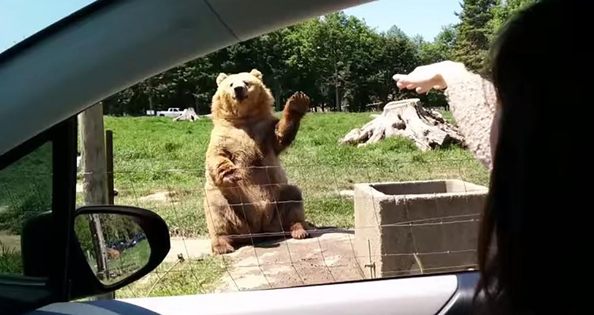 0840352_bear1