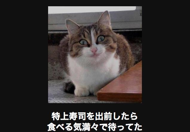 15758 ネコ