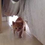 「初めまして・・・」保護された子猫の初めての挨拶が可愛すぎて、胸キュン♡