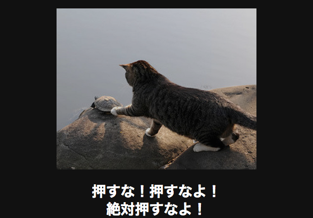 11003 動物