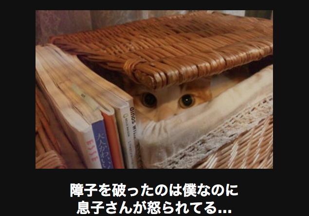 14981 ネコ