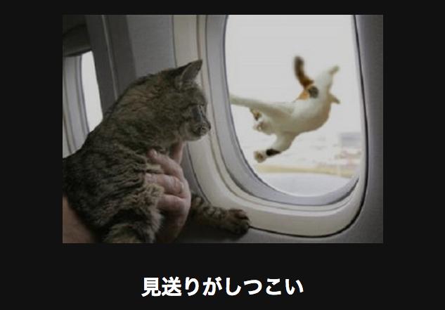 12541 ネコ