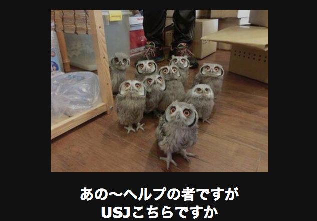 21115 動物
