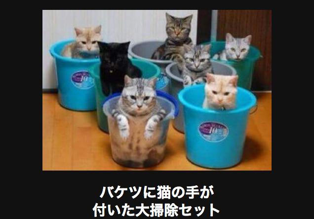11114 ネコ