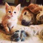 優しさで溢れてる♡お家にやってきた子猫を大きな愛で包むワンコ