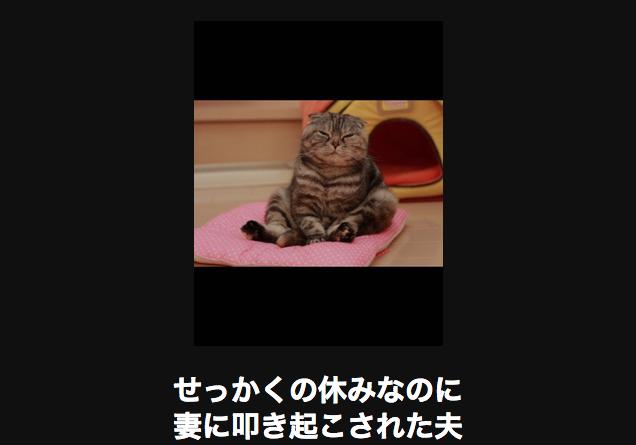 19883 猫