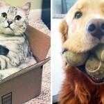 犬とネコの決定的な11の違い
