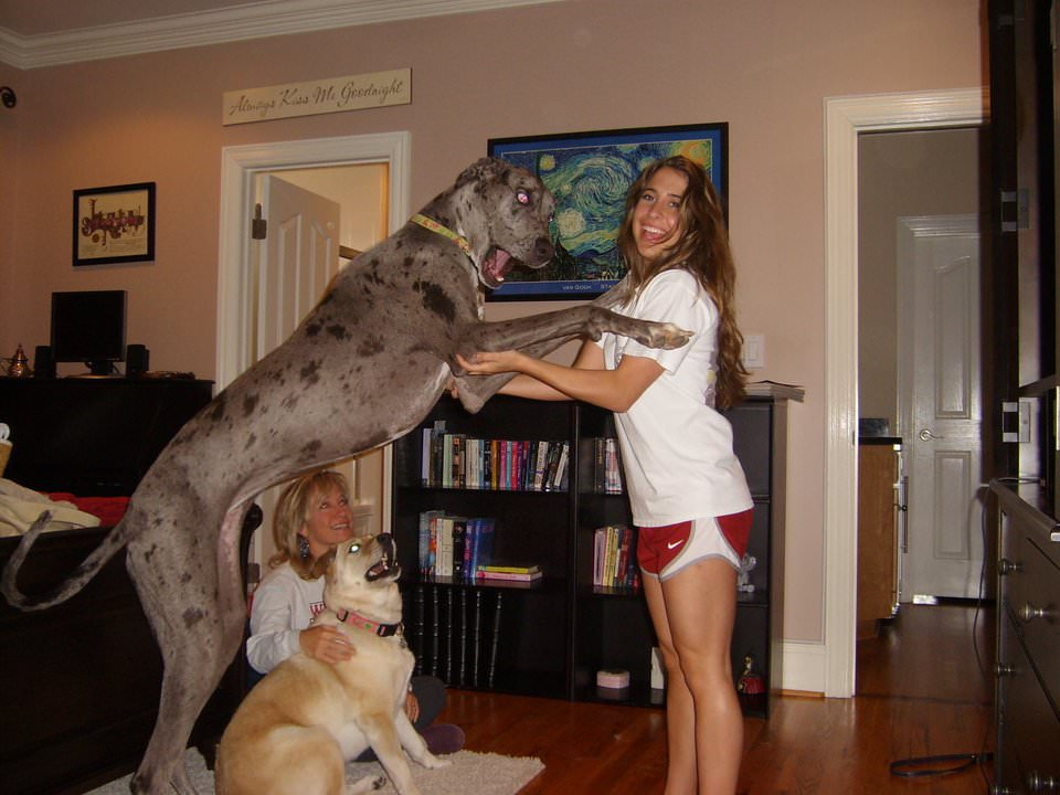 Comes top great dane dick size from the