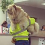 獣医「この子ね・・・子犬じゃなくてヤギ!」動物病院で起こった驚きのエピソード10選