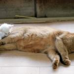 心がほっこり!保護されて間もない子猫が、先輩猫に寄り添う