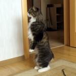 「あれは誰ニャ?」二本足で、初めて見る赤ちゃんを覗き込むニャンコ
