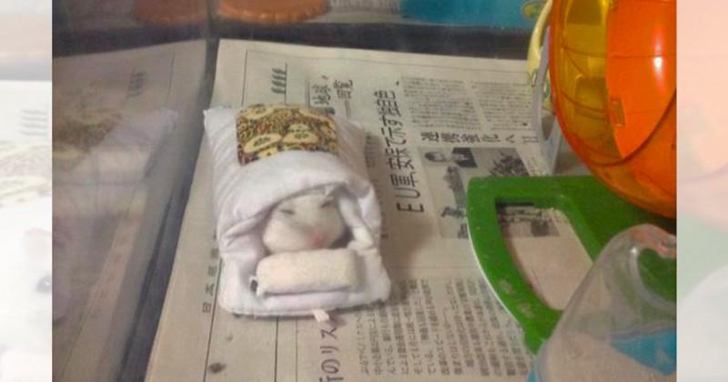 寝ぼけなまこも可愛い!お布団から顔を出すハムスターが天使すぎる – CuRAZY [クレイジー]