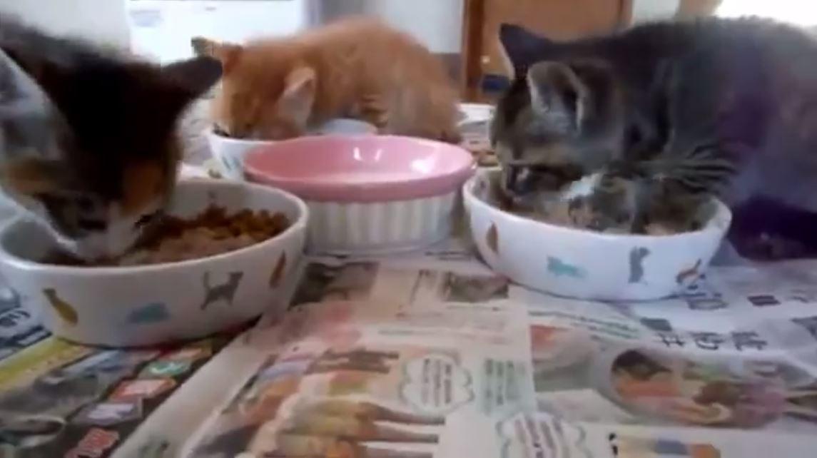 猫 眠り食い1