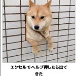 【キケン注意】腹筋をガタガタにする犬のボケて15選