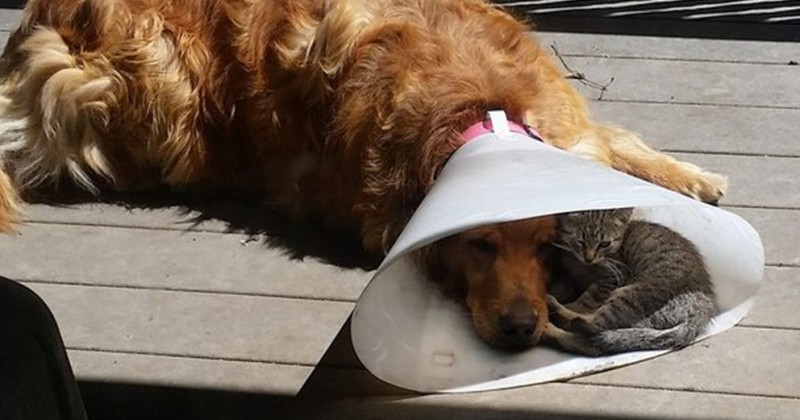 【私たちの最高のパートナー】犬の優しさがわかる写真16選