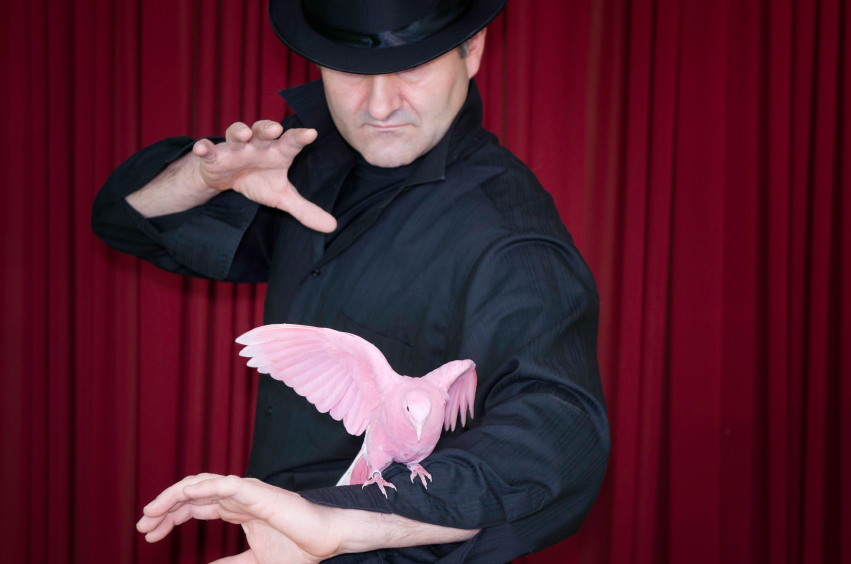 Magic trick with pink pigeon