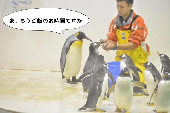 1530701_pen1 (1)