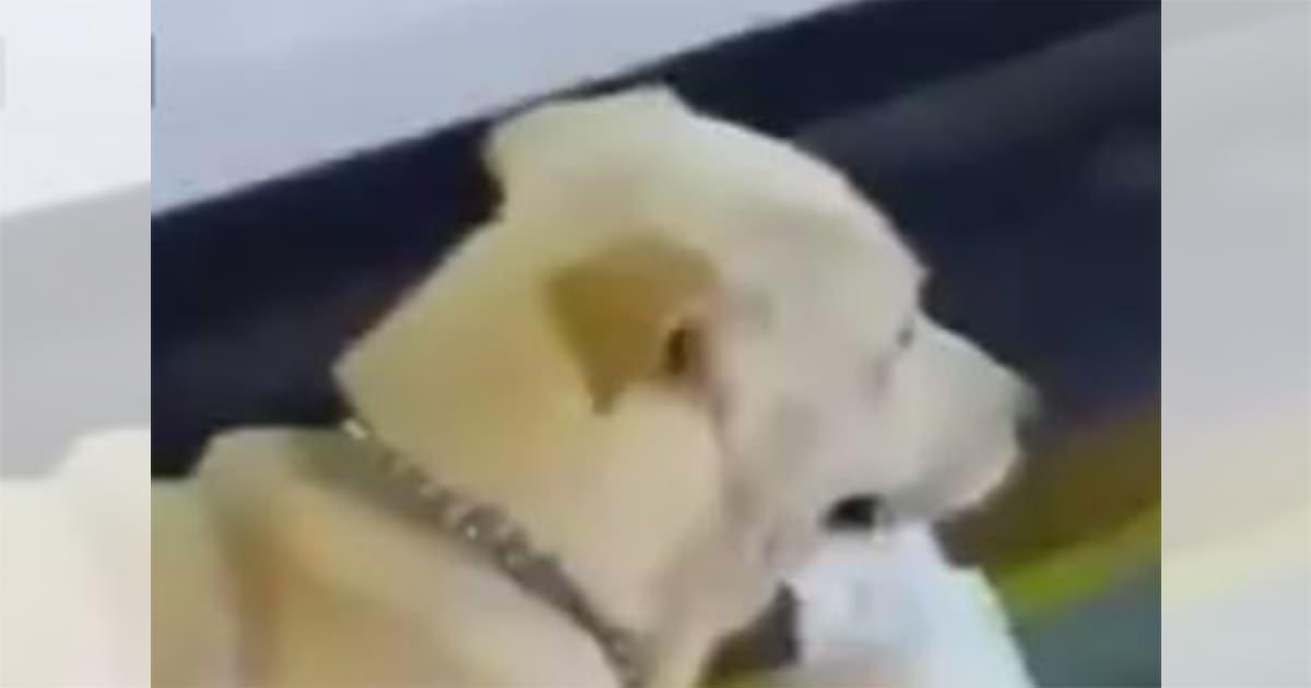 犬 レジ袋2