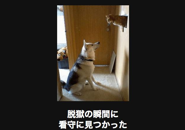 スクリーンショット 2015-09-26 20.17.58
