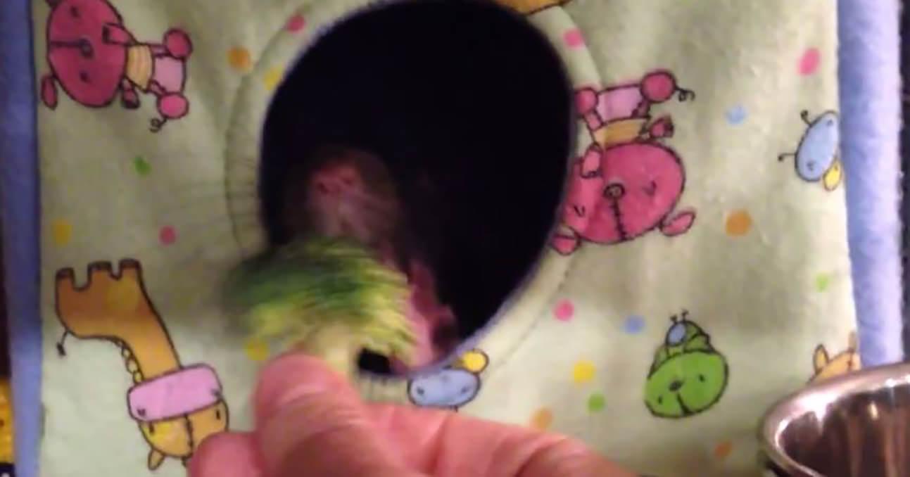 ネズミ ブロッコリー1