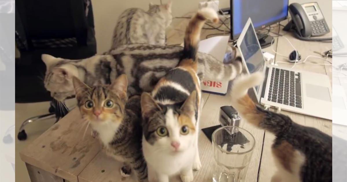 猫 オフィス3