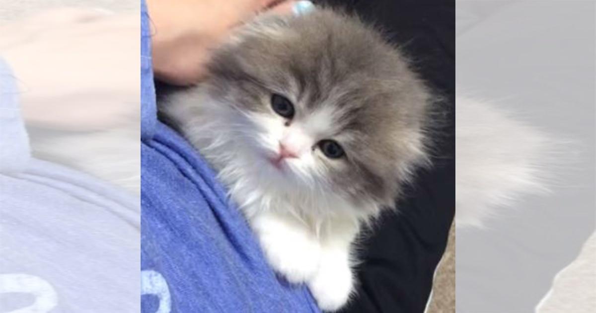 子猫 キラースマイル 投稿挿入